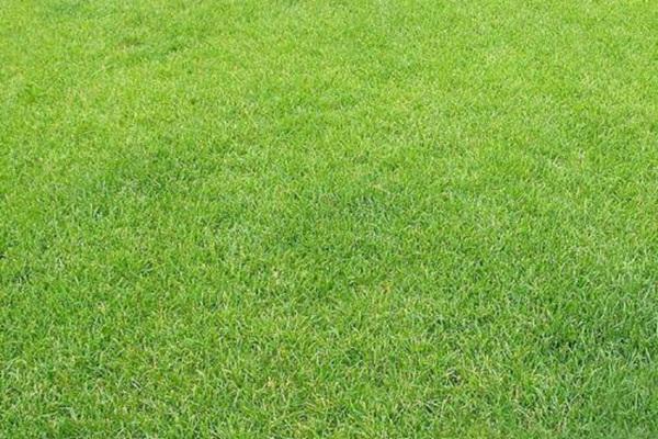 高羊茅草坪用什么除草剂