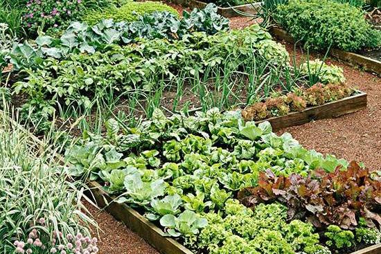 蔬菜種植.容易犯的十個錯誤!