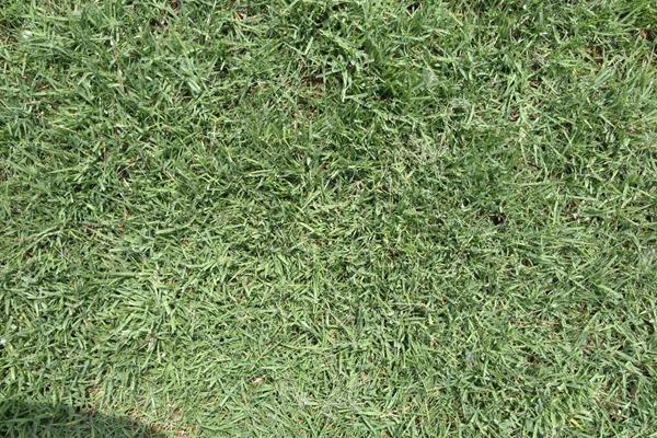 什么是暖季型草坪,暖季型草坪的特点
