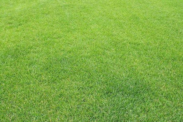 什么是暖季型草坪,暖季型草坪有什么特点?